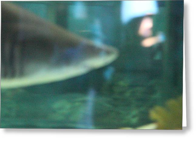 Shark - National Aquarium In Baltimore Md - 121210 Greeting Card by DC Photographer