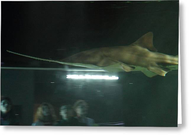 Shark Greeting Cards - Shark - National Aquarium in Baltimore MD - 121212 Greeting Card by DC Photographer
