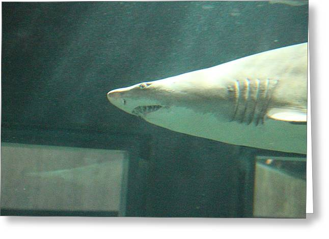 Sharks Greeting Cards - Shark - National Aquarium in Baltimore MD - 121219 Greeting Card by DC Photographer