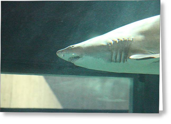 Aquatic Greeting Cards - Shark - National Aquarium in Baltimore MD - 121220 Greeting Card by DC Photographer