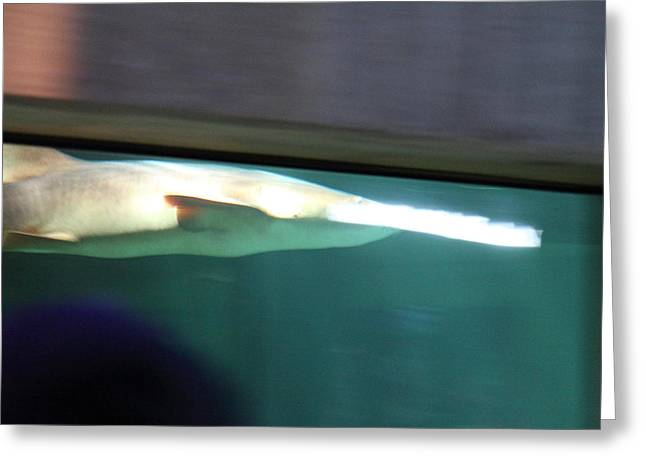 Shark - National Aquarium in Baltimore MD - 12123 Greeting Card by DC Photographer
