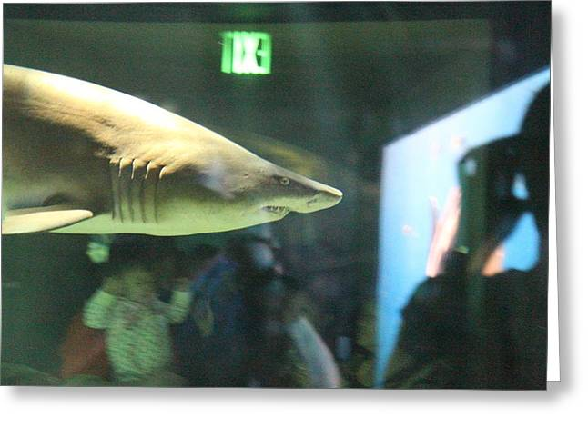 Aquatic Greeting Cards - Shark - National Aquarium in Baltimore MD - 12127 Greeting Card by DC Photographer