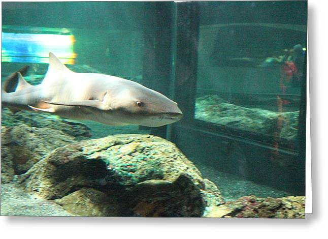 Sealife Greeting Cards - Shark - National Aquarium in Baltimore MD - 12128 Greeting Card by DC Photographer