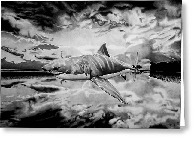 White Shark Drawings Greeting Cards - Shark Out Of Water Greeting Card by Jason Dunning