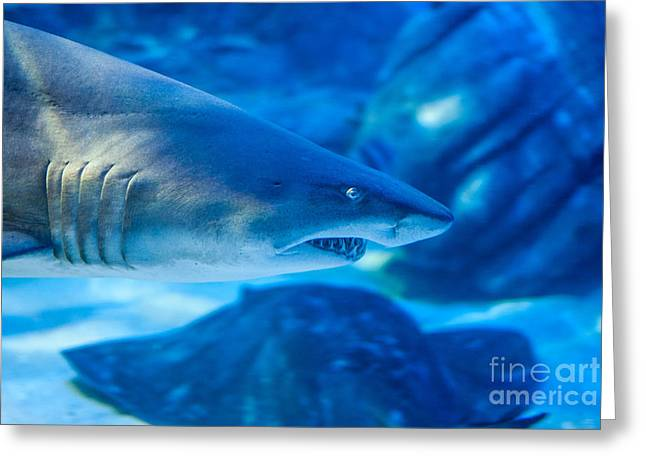 Shark Mouth Greeting Cards - Shark Greeting Card by Ray Warren