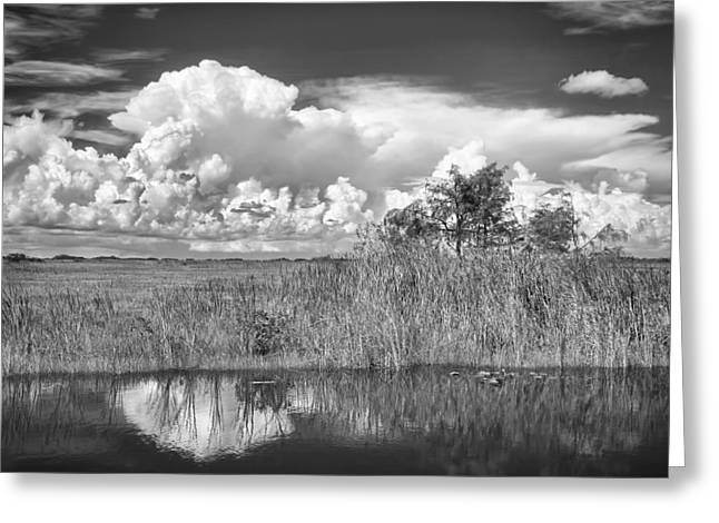 Sloughs Greeting Cards - shark river slough BW Greeting Card by Rudy Umans