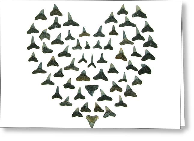 I Hate Greeting Cards - Shark Tooth Valentine Greeting Card by Jennifer Booher