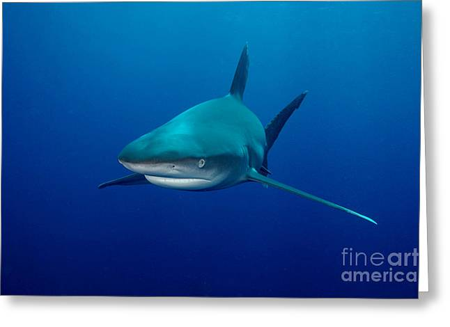 Sharks Greeting Card by Boon Mee
