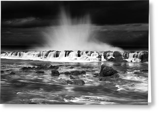 Sharks Cove Greeting Cards - Sharks Cove Spectacle Greeting Card by Sean Davey