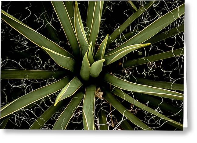 Sharp Points - Yucca Plant Greeting Card by Steven Milner