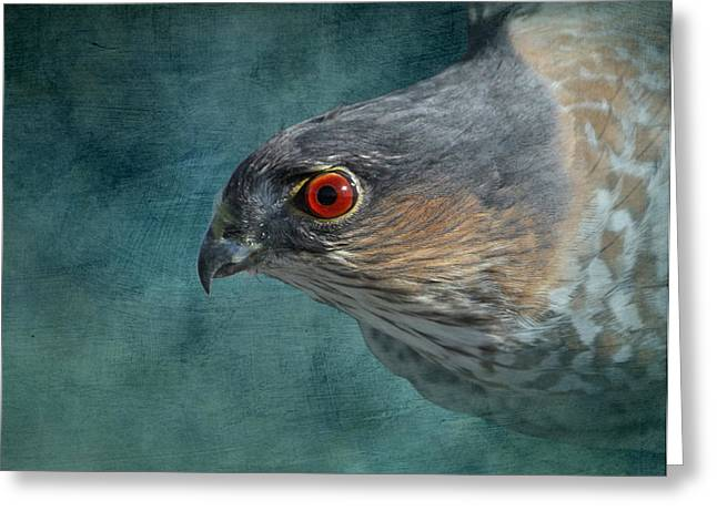 Shinning Greeting Cards - Sharp Shinned Hawk Greeting Card by Angie Vogel