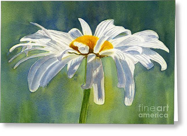 White Daisy Greeting Cards - Shasta Daisy Blossom with Blue Background Greeting Card by Sharon Freeman