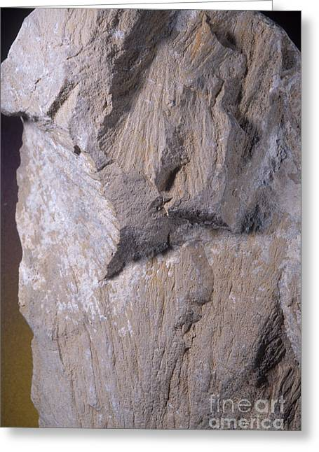 Meteor Greeting Cards - Shatter Cones, Barringer Crater Greeting Card by Gregory G. Dimijian, M.D.