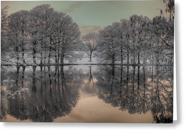 Bald Cypress Greeting Cards - Shaw Nature Reserve Greeting Card by Jane Linders
