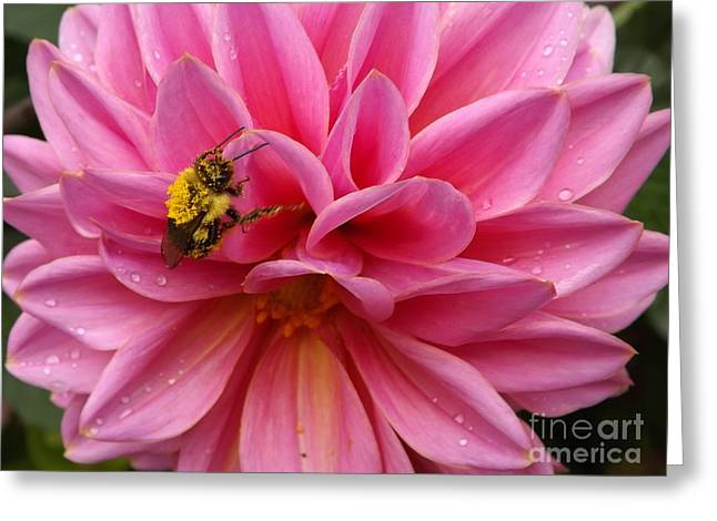 Gathering Greeting Cards - She Must BEE From Pollen Greeting Card by Lingfai Leung