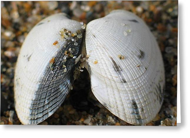 Steamer Lane Greeting Cards - She Sells Sea Shells Greeting Card by Ru Tover