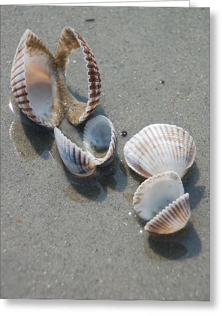 She Sells Sea Shells Greeting Card by Suzanne Gaff