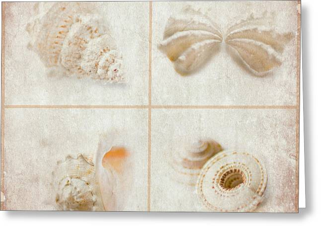 Shell Collection Digital Art Greeting Cards - She Sells Seashells Greeting Card by Linde Townsend