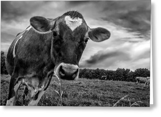 Cow Greeting Cards - She wears her heart for all to see Greeting Card by Bob Orsillo