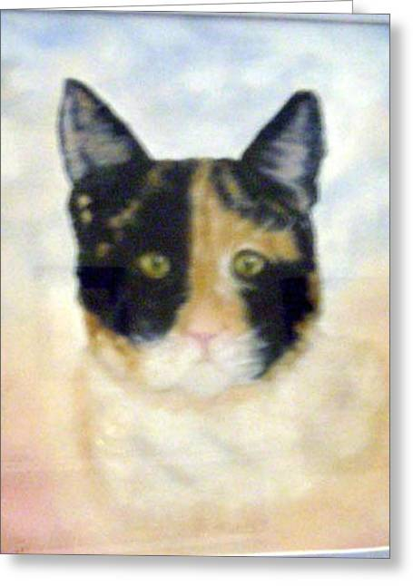 Pat Mchale Greeting Cards - Sheba The Calico Greeting Card by Pat Mchale