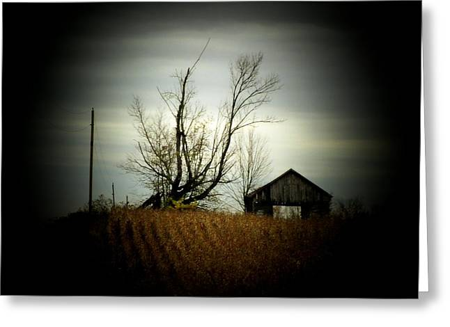 Country Shed Greeting Cards - Shed and Cornfield Greeting Card by Michael L Kimble