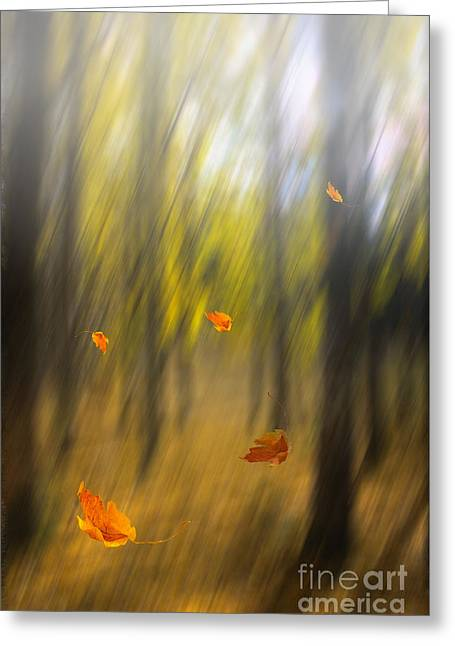 Autumn Digital Greeting Cards - Shed leaves Greeting Card by Veikko Suikkanen