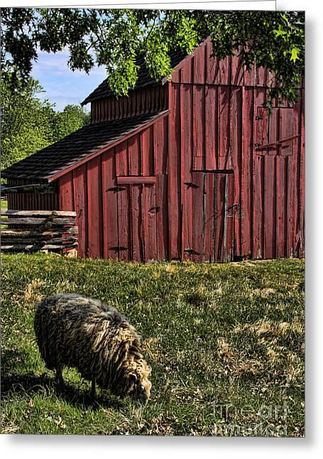 Kansas City Photographer Greeting Cards - Sheep and Barn Greeting Card by Crystal Nederman