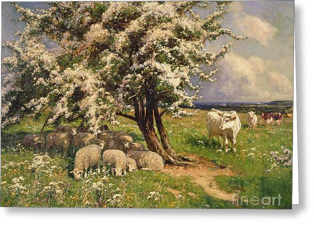 Observe Greeting Cards - Sheep and cattle in a landscape Greeting Card by Arthur Walker Redgate