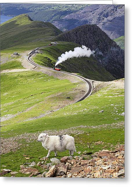 Snowdon Greeting Cards - Sheep and mountain railway Greeting Card by Jane Rix