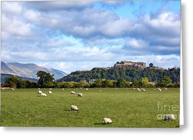 Defensive Greeting Cards - Sheep and Stirling Castle Greeting Card by Jane Rix