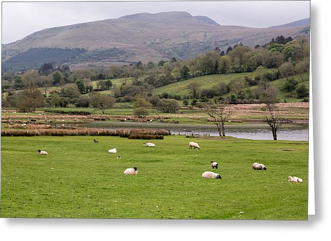 Blackface Greeting Cards - Sheep at Glencar Lake Greeting Card by MaryGail Perkins