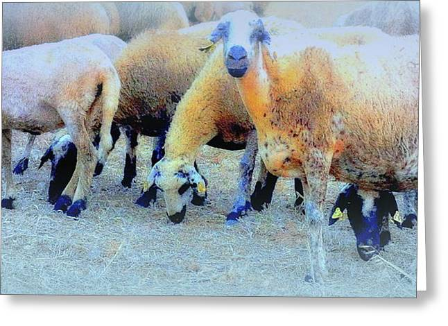 Basement Greeting Cards - Sheep Collection Greeting Card by Hilde Widerberg