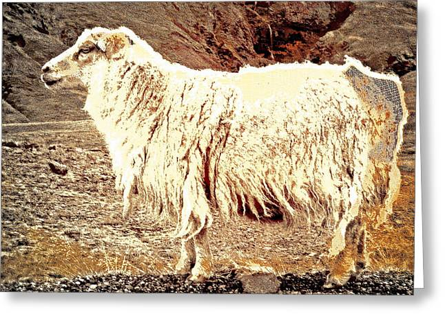 Psychiatric Greeting Cards - Sheep Day In The Mountains  Greeting Card by Hilde Widerberg
