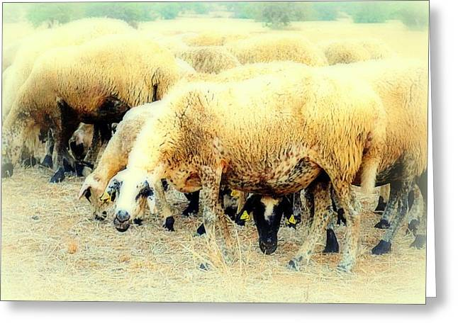 Sweating Photographs Greeting Cards - Sheep Feeling Greeting Card by Hilde Widerberg