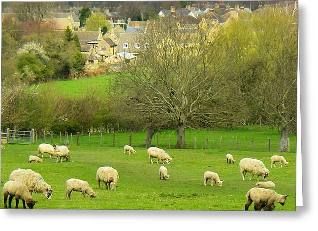Geobob Greeting Cards - Sheep in Classic English Landscape and Pastures near Broadway Village Cotswold District England Greeting Card by Robert Ford