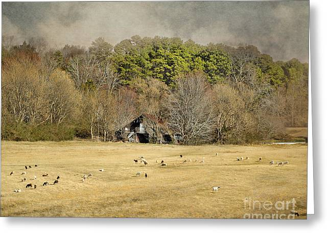Tennessee Barn Greeting Cards - Sheep in the South Greeting Card by Jai Johnson