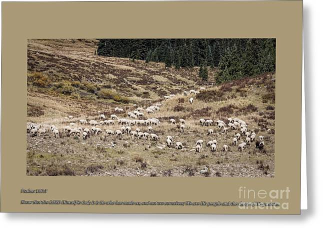 Scenic Drive Greeting Cards - Sheep Of His Pasture Greeting Card by Janice Rae Pariza