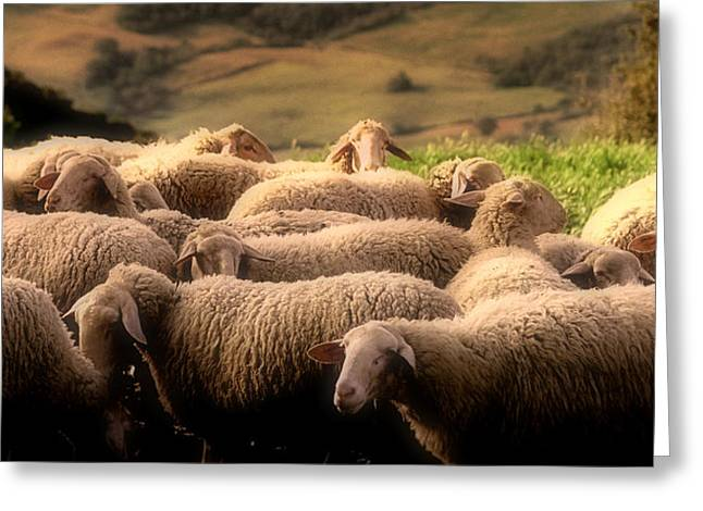 Crete Greeting Cards - Sheep on a Hillside Greeting Card by Andrew Soundarajan