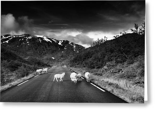 Mountain Road Greeting Cards - Sheep on the Road in Norway Greeting Card by Mountain Dreams