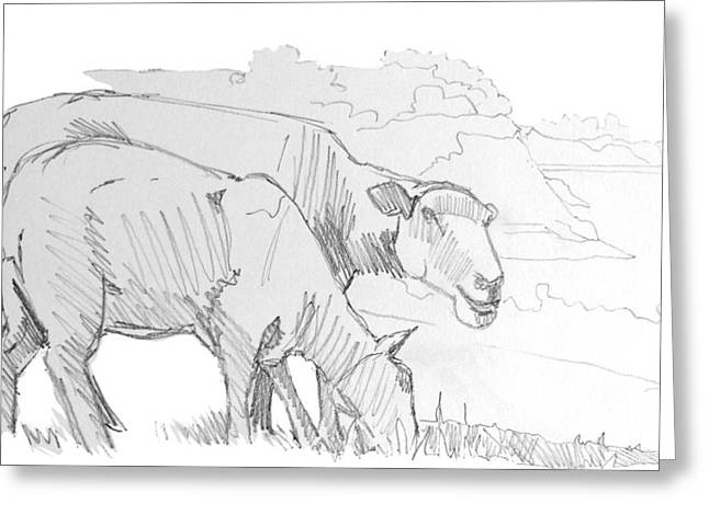 Bad Ass Drawings Greeting Cards - Sheep Pencil Drawing  Greeting Card by Mike Jory