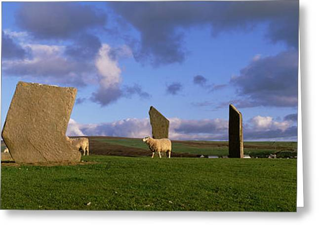 Stones Greeting Cards - Sheep, Stones Of Stenness, Orkney Greeting Card by Panoramic Images