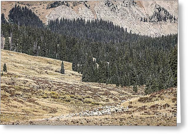 Scenic Drive Greeting Cards - Sheepherding Southwest Colorado Greeting Card by Janice Rae Pariza