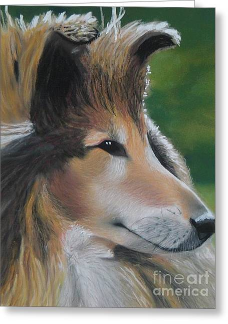Collie Pastels Greeting Cards - Shelagh Greeting Card by Pastel Art By Taylor