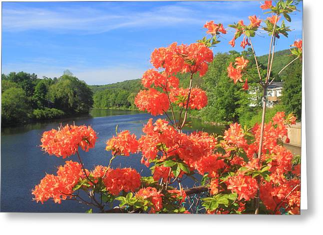 Shelburne Falls Bridge Of Flowers Azelea Greeting Card by John Burk
