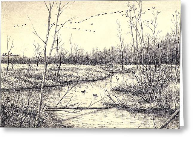 Swamp Drawings Greeting Cards - Shelby Swamps/ Greeting Card by Arthur Barnes
