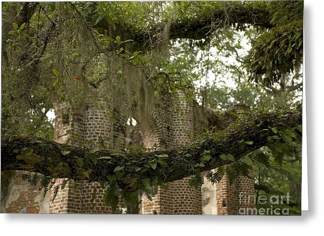 Civil War Site Greeting Cards - Sheldon Church Ferns 2 Greeting Card by Jere Snyder
