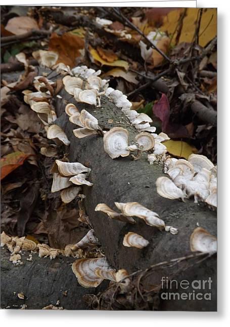 Ohio Greeting Cards - Shelf Mushrooms in Autumn Greeting Card by Sara  Raber