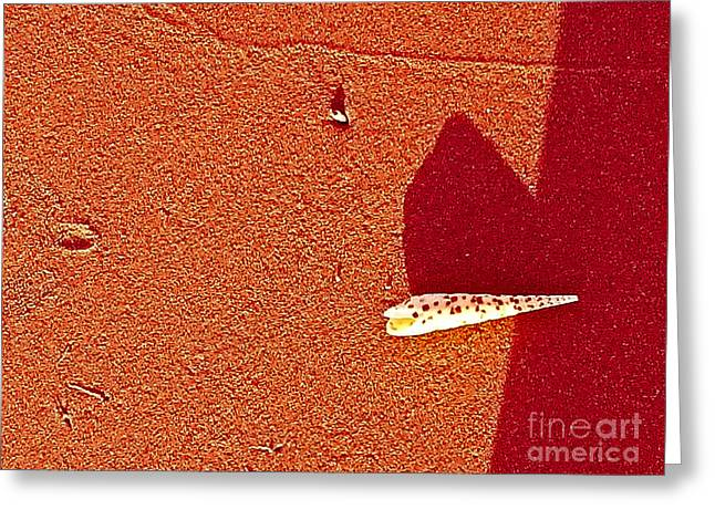 Shell Texture Greeting Cards - Shell and Sand Reddish Version Greeting Card by Fei A