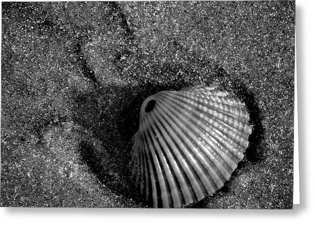 Seashell Art Photographs Greeting Cards - Shell Greeting Card by Brandon Addis
