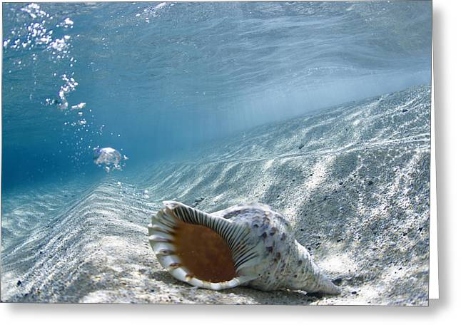 Sea Life Photographs Greeting Cards - Shell burp Greeting Card by Sean Davey